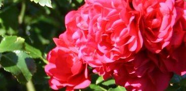 Gartentätigkeiten KW 34